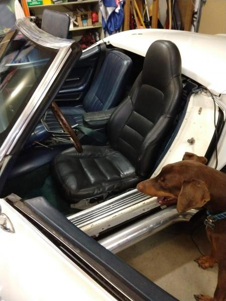 C6 Corvette seat in a C3 Corvette, photo from the front with my dog also in the picture.
